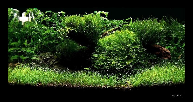 Moss_Spot-80010.jpg