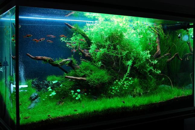 Novenyes_akvarium-57679.jpg