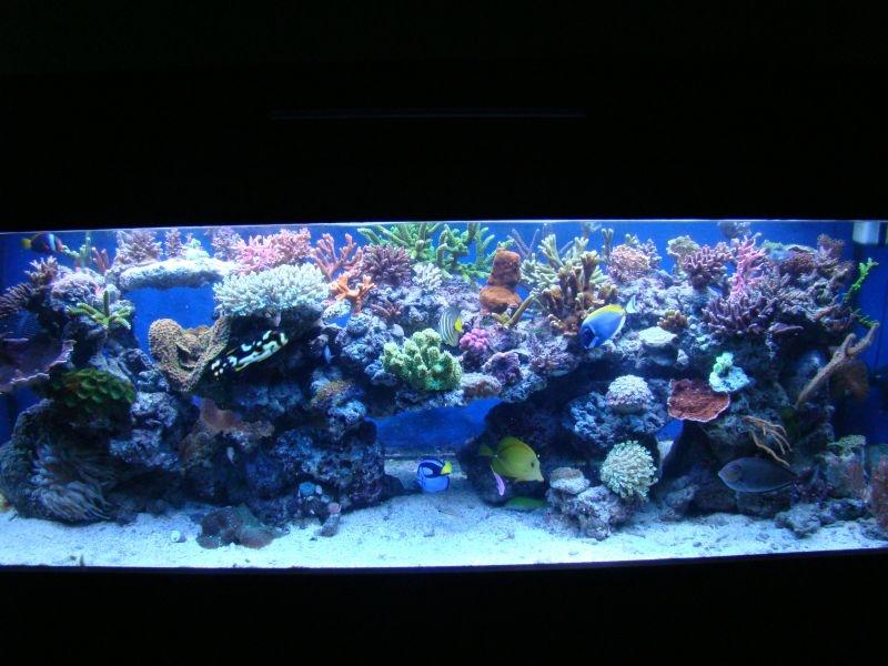 Tengeri_akvarium-87105.jpg