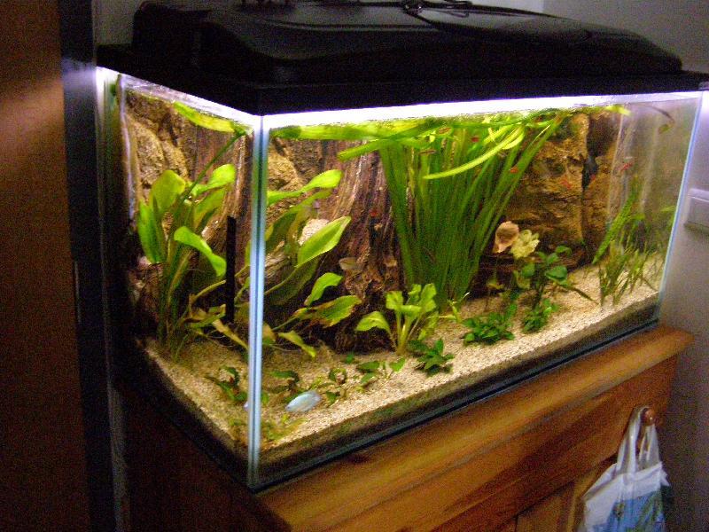Azsiai_biotop_akvarium-1.JPG